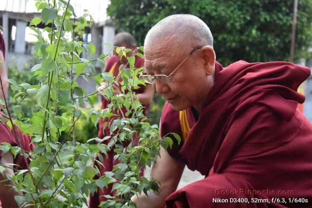 Gosok Rinpoche Nepal 20200615220122