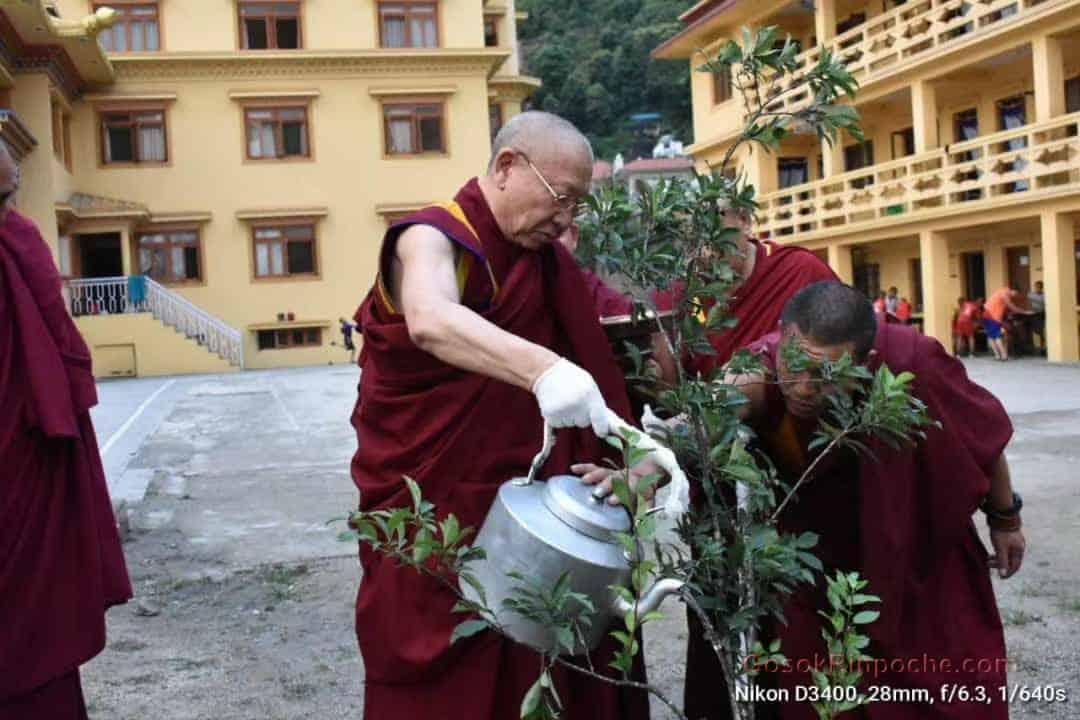 Gosok Rinpoche Nepal 20200615220140